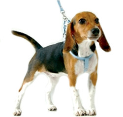 Suede Harness & Leash Set - Blue