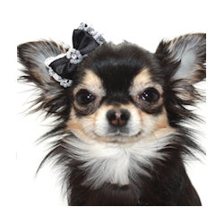 LACE & PEARL BOW - BLACK (Pet Boutique)