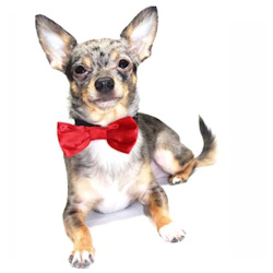 Satin Bow Tie - Red