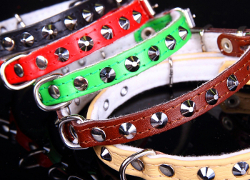 LEATHER COLLAR WITH STUDS - GREEN ()